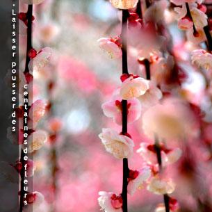 7. Laisser pousser des centaines de fleurs