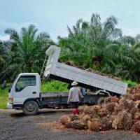 Element AI: améliorer la traçabilité de l'huile de palme