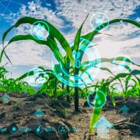 Telus se lance dans la transformation numérique du système alimentaire